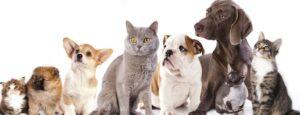 貓和狗-1400x500-1200x460